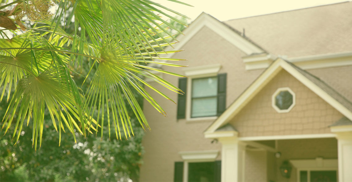 Palmetto fronds in front of house